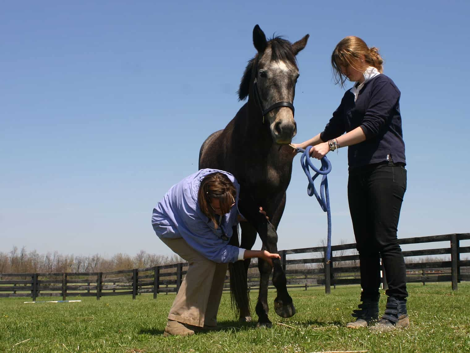 Is My Horse Neurologic or Lame? – The Horse
