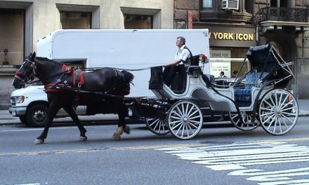 Carriage Horse Controversy Extends Beyond New York City