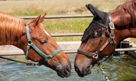 Clear and Present Danger: Reduce Your Horse's Disease Risk