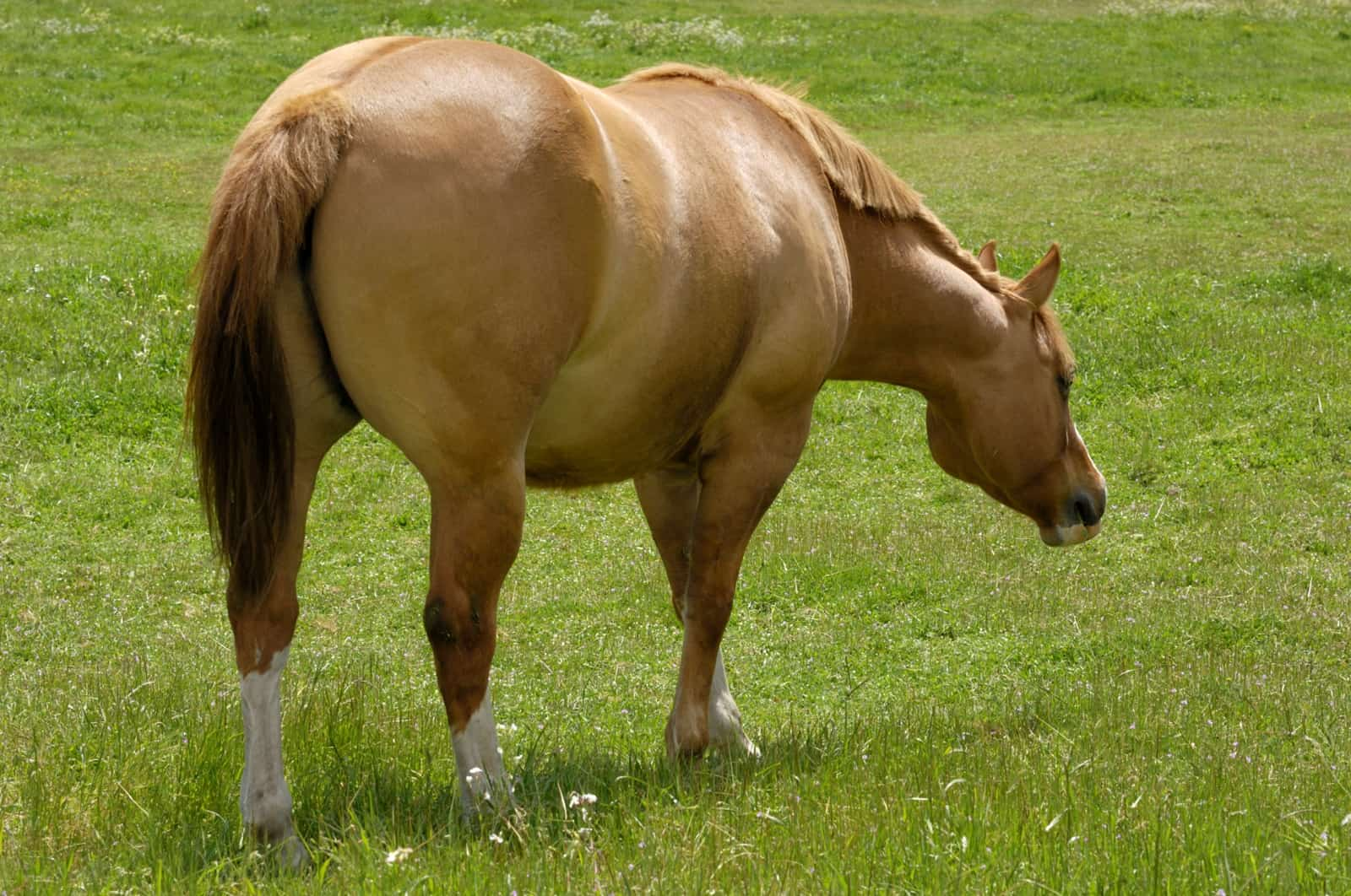 Weight Loss for Hefty Horses