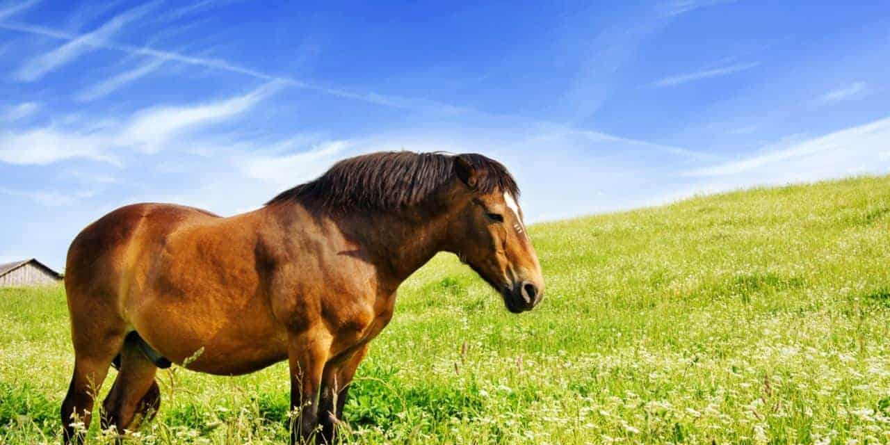 Understanding and Managing Equine Obesity