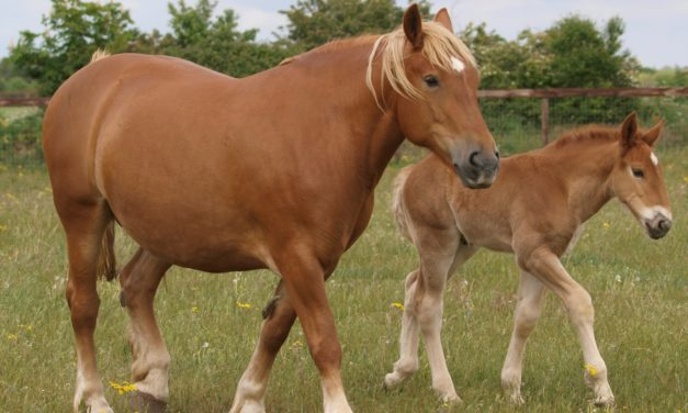 Mare Thyroid Condition Might be Linked to Foal Deaths