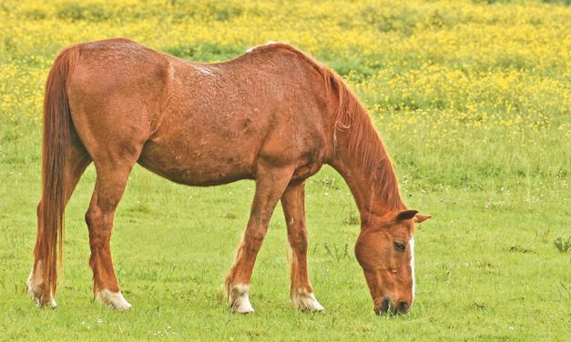 Dealing With Rain Rot in Horses