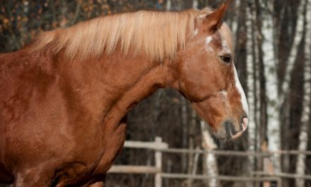 Equine Innovators: Dr. Amanda Adams Talks About Older Horses
