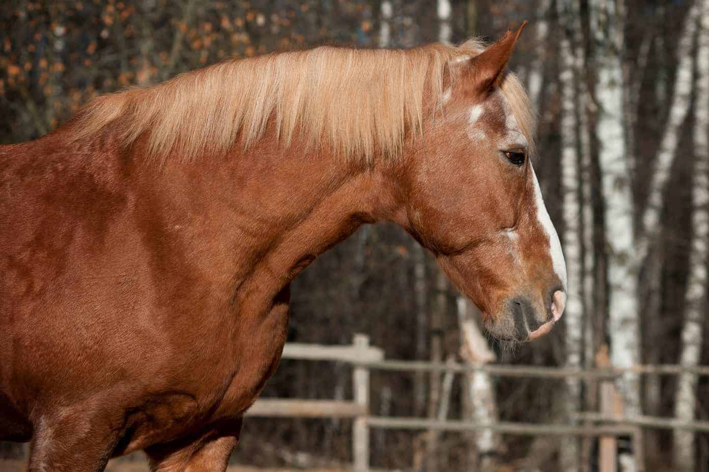 Equine Immunity From Birth to Old Age – The Horse