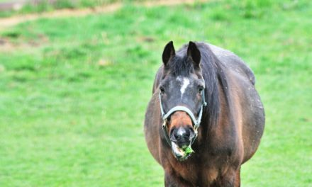 Caring for and Keeping Older Horses