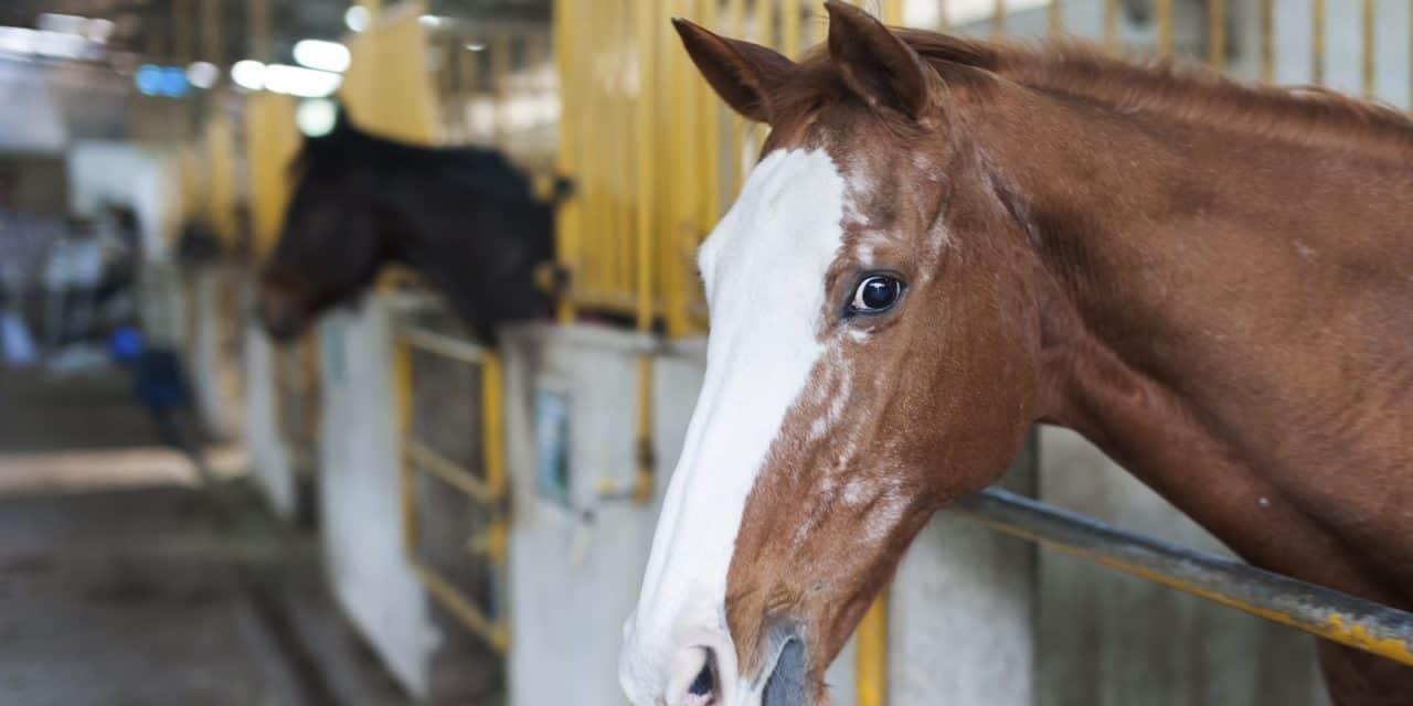 Poll Recap Senior Superstars The Horse