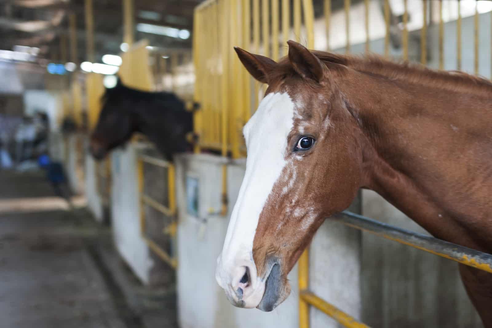 Senior horses