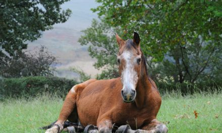 Senior Horses: Living the Good Life