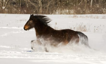 New Year's Resolutions for Maximizing Horse Health in 2015