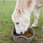 Senior Horses and Choke Risk