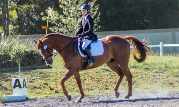 Is It Time for Your Horse to Retire?