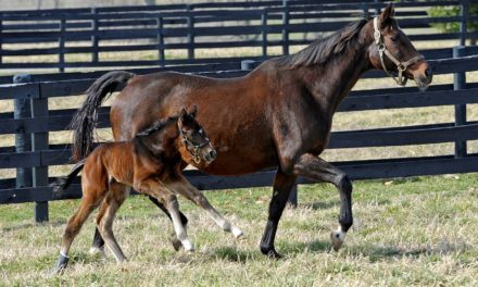 Breeding Older Mares