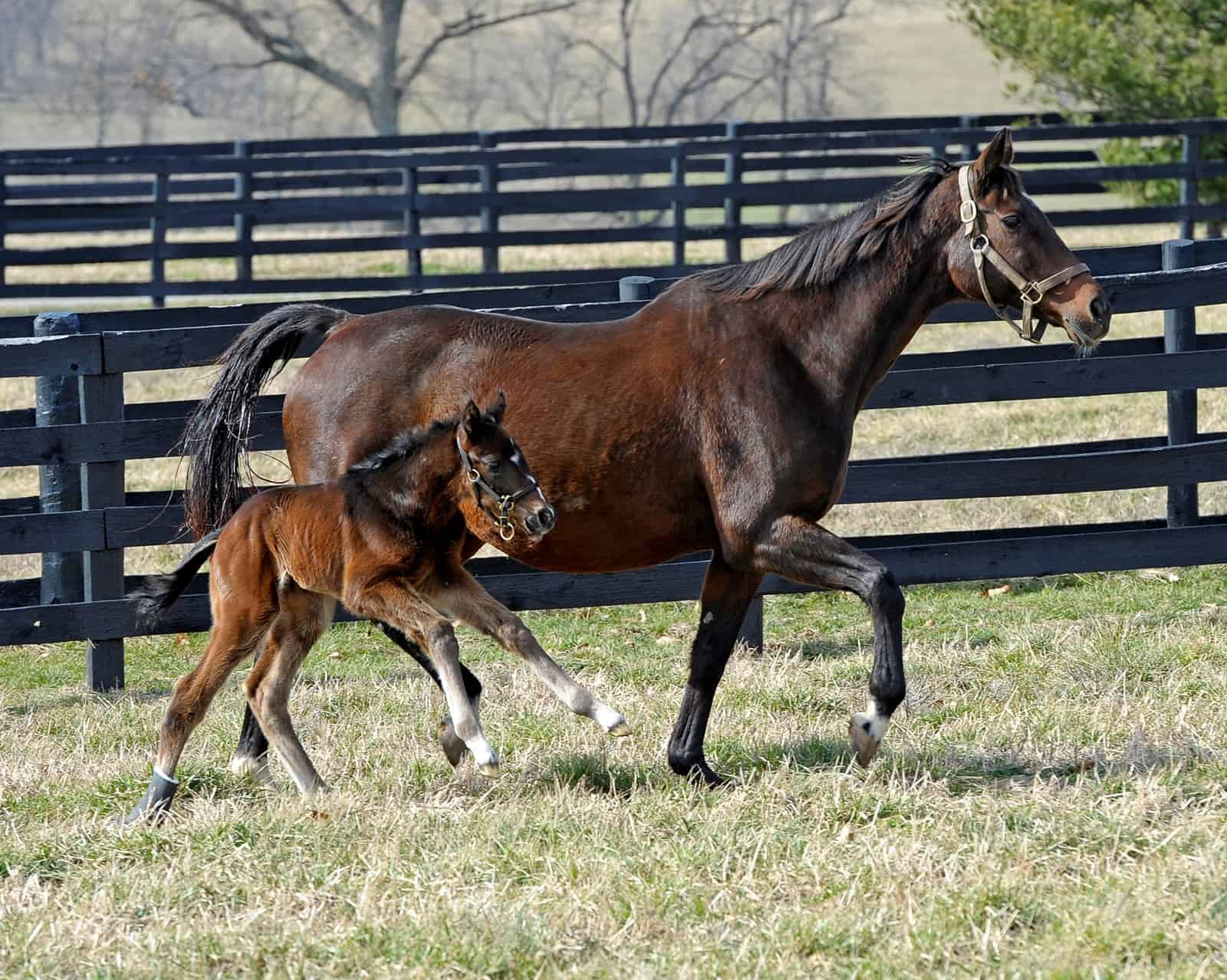 Breeding Older Mares – The Horse