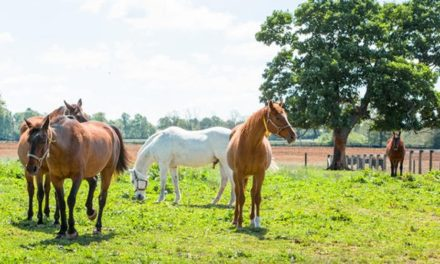 How Does Transport Impact Senior Horse Immune Function?