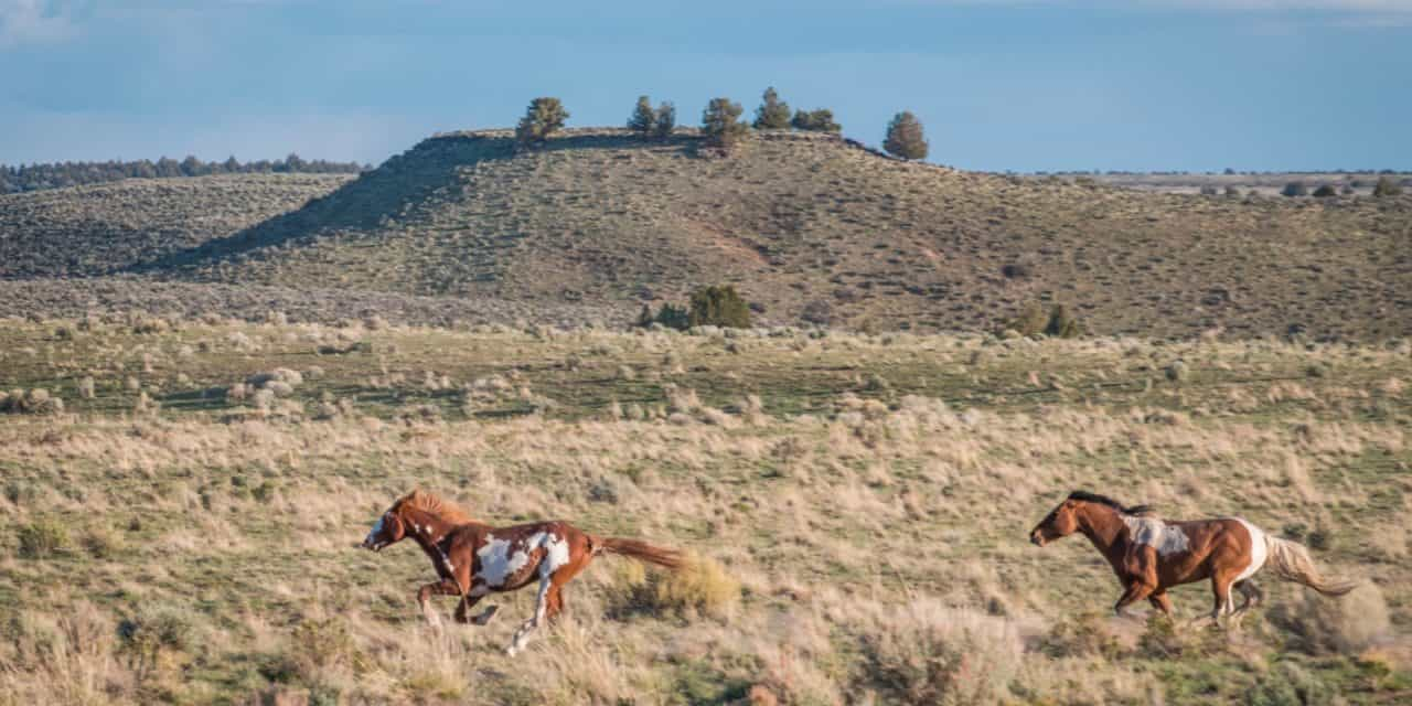 Television Show to Feature Oregon's Mustangs