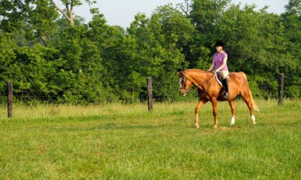 Researchers Test Joint Supplement's Impact on Old Horses