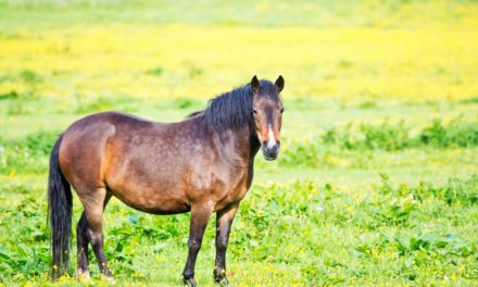 What's the Best Weight Loss Plan for My Horse?