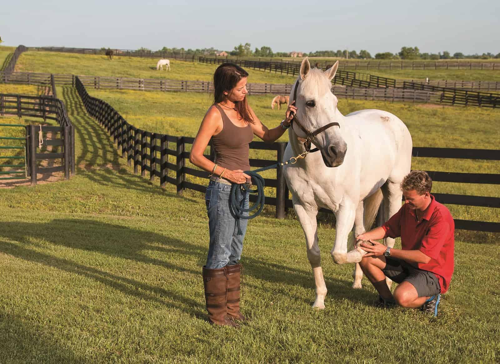 Horse Hoof-Care Triage