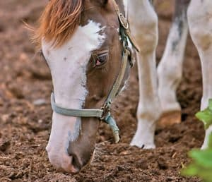 7 Equine Nutrition Myths Busted