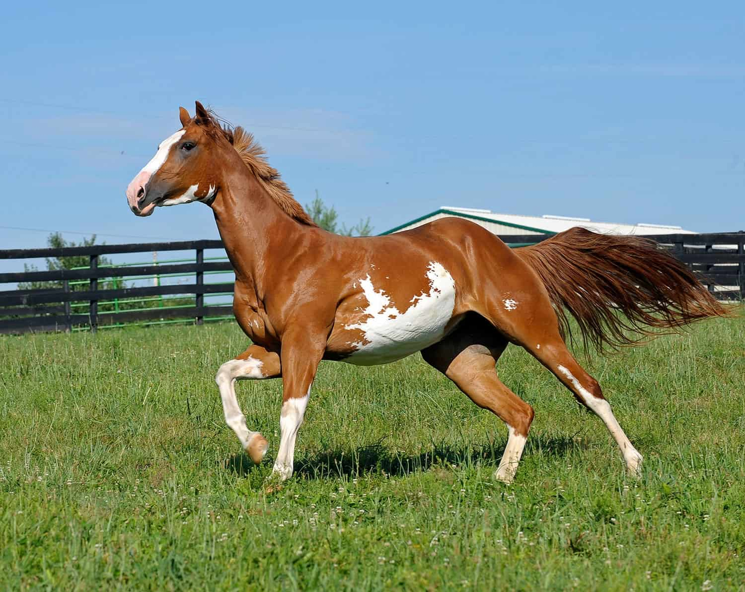 How To Make Horse Paint