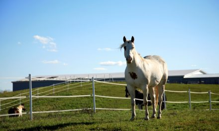 Does Electric Fencing Stress Horses?
