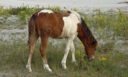 Course Will Explore Equine Welfare Practices Worldwide