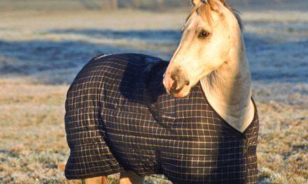 Horse Blanketing FAQs