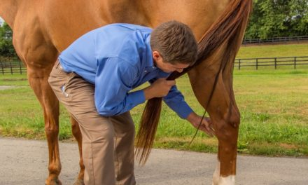 Consider SDFT Attachment Problems in Lame Horses