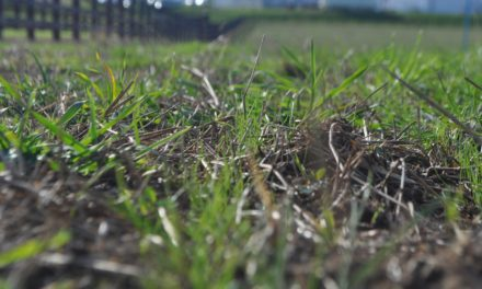 Quick Fixes to Improve Horse Pastures