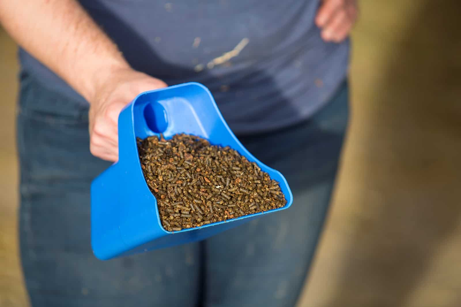 Pelleted vs. Textured Horse Feed - The Horse