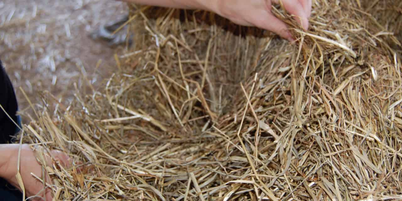 Relative Feed Value of Hay – The Horse