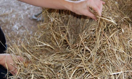 Soaking Hay: How Much Sugar is Actually Removed?