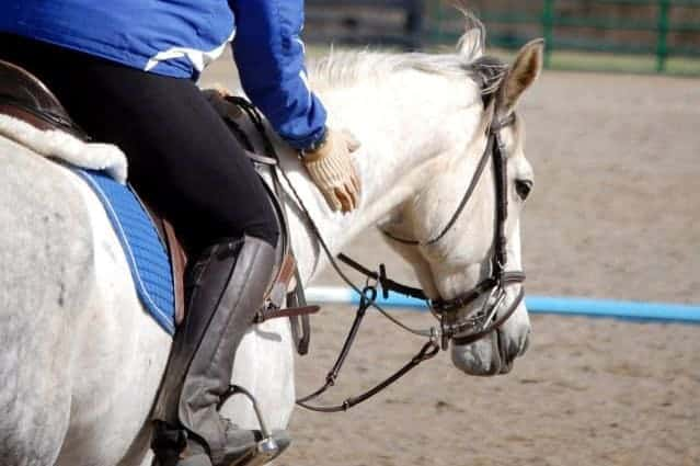 Do Horses Prefer Patting or Scratching?