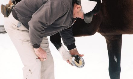 Don't Ignore Your Horse's Hooves this Winter and Spring