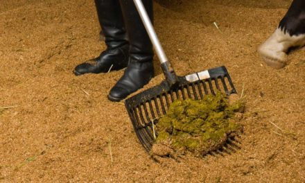 Seasonal Horse Manure Changes