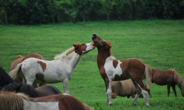 Management Significantly Affects Foals' Gut Microbiota