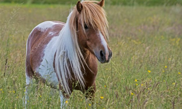 New Method of Fixing Fractures in Small Equids