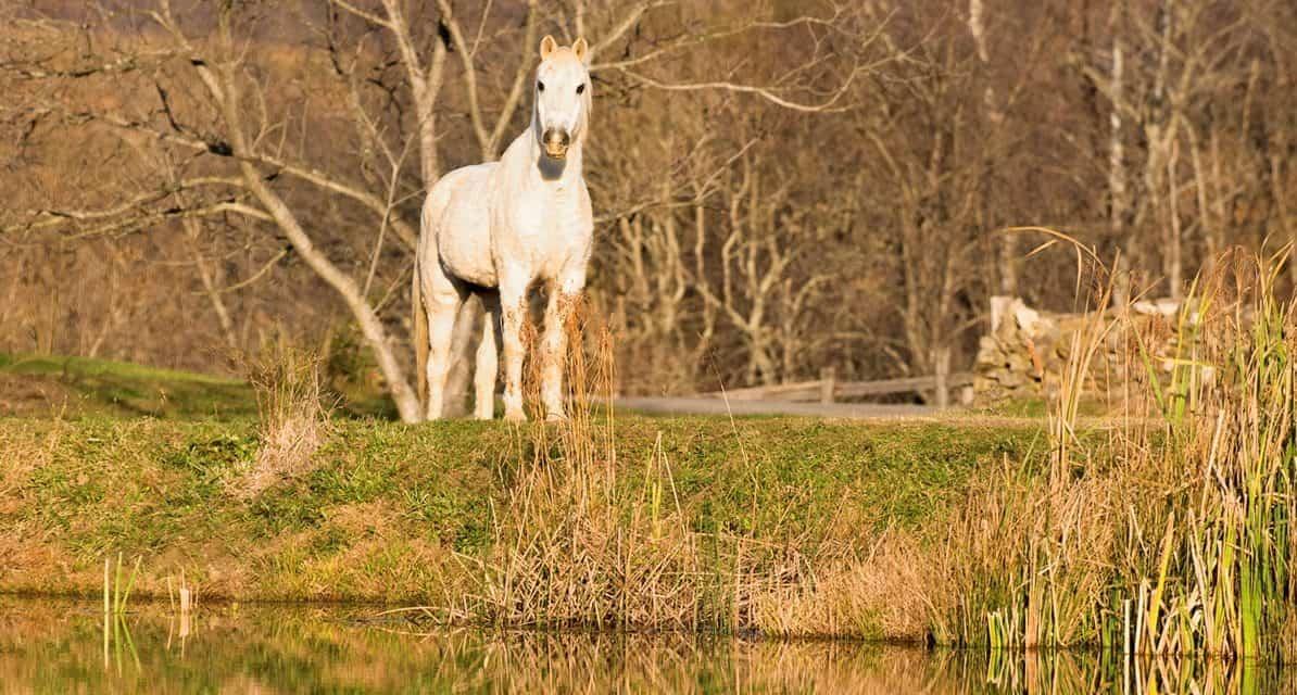 potomac horse fever