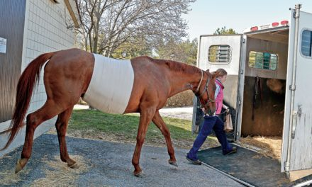 The Vet Tech's Role in Colic Surgery