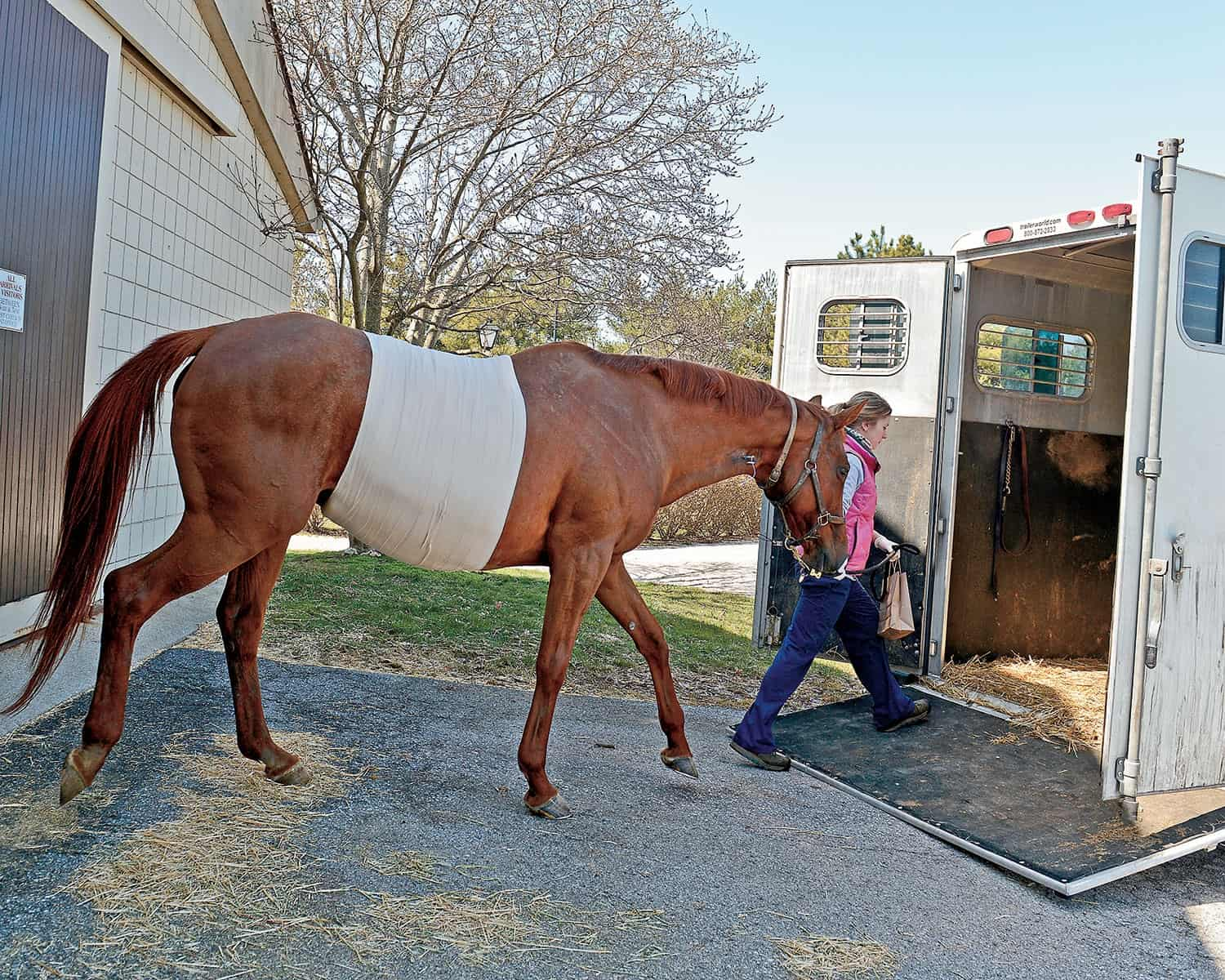 Caring for the Equine Colic Survivor