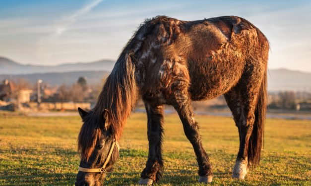 A Closer Look at Comorbidities in Horses
