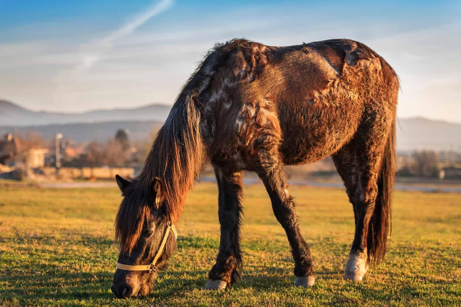 A Closer Look at Comorbidities in Horses