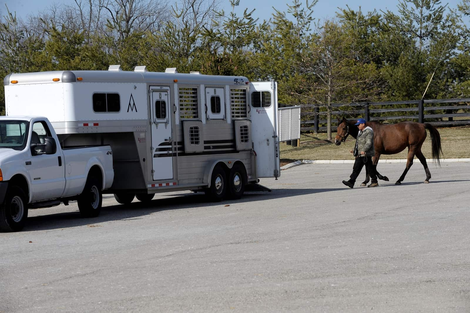 Horse Trailer Safety And Value The Horse