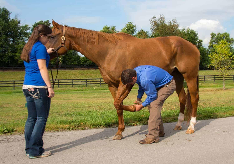 How to Measure Horses' Rehabilitation Progress Objectively