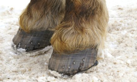 Readers Say No Shoes This Winter