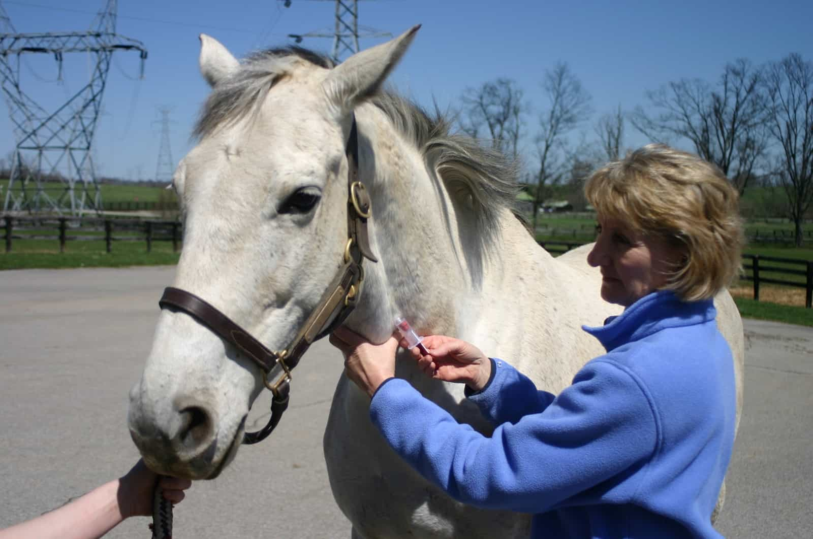 Finding the Cause of Chronic Diarrhea in Horses: Be Methodical – The