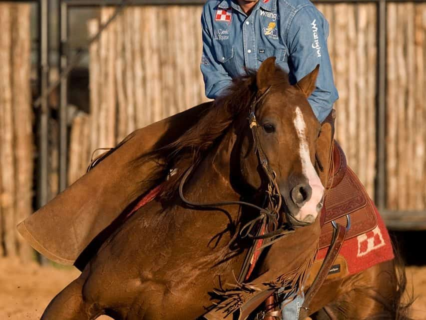 6 Ways to Feed Performance Horses for Greater Achievement