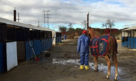 The Role of State Officials in Protecting Horse Health