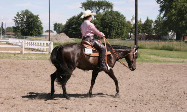 The Most Common Western Performance Horse Lamenesses